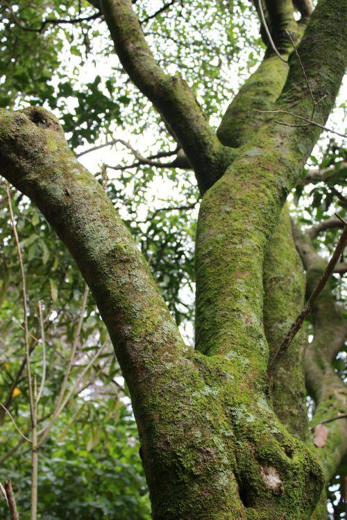 tree_fork